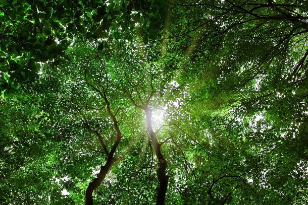 tree_woods_00005