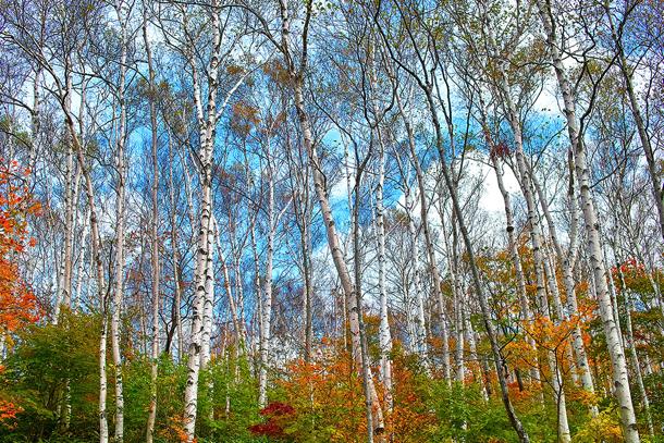 tree_woods_00122