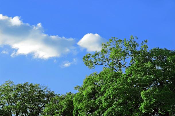 tree_woods_00163