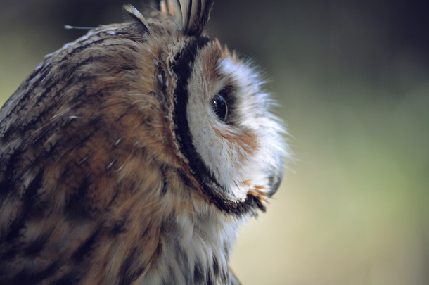 2015-04-Life-of-Pix-free-stock-photos-owl-bird-nature-head-photostockeditor copy